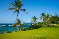 Palmen door een mooi strand Royalty-vrije Stock Fotografie