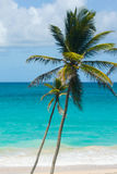 Palmen door een mooie turkooise overzees Stock Foto's
