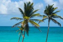 Palmen door een mooie turkooise overzees Stock Foto