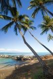 Palmen door Tropische Lagune Stock Afbeeldingen