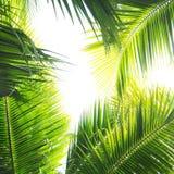 Palmen-Dschungel stockfoto