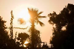 Palmen durch das Meer unter Sonnenuntergang Stockbilder