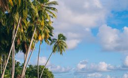 Palmen durch den Ozean stockfotografie