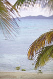 Palmen durch den Ozean Lizenzfreie Stockfotos