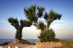 Palmen durch den Strand lizenzfreie stockfotografie