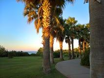 Palmen durch die Linie zum frühen Morgen des Strandes Stockfotos