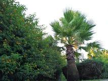 Palmen durch die Linie zum frühen Morgen des Strandes Stockbilder
