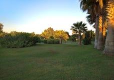 Palmen durch die Linie zum frühen Morgen des Strandes Lizenzfreies Stockbild