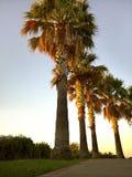 Palmen durch die Linie zum frühen Morgen des Strandes Stockbild