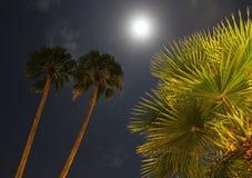 Palmen durch Mondschein Lizenzfreies Stockbild