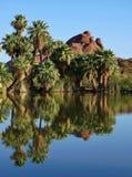 Palmen durch See Lizenzfreie Stockfotografie