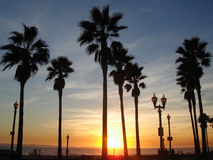 Palmen in een kleurrijke zonsondergang Stock Afbeelding