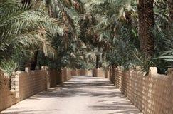 Palmen in een Oase stock afbeelding