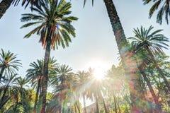 Palmen in een tropische toevlucht bij mooie zonnige dag Stock Afbeelding
