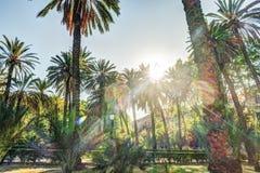 Palmen in een tropische toevlucht bij mooie zonnige dag Stock Afbeeldingen