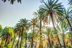 Palmen in een tropische toevlucht bij mooie zonnige dag Stock Foto