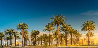 Palmen in een tropische toevlucht bij mooie zonnige dag Beeld van tropische vakantie en zonnig geluk Royalty-vrije Stock Afbeelding