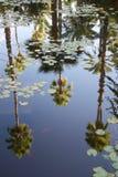 Palmen in een vijver met waterlilies en goudvis worden weerspiegeld die stock afbeelding