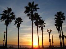 Palmen in einem bunten Sonnenuntergang Stockbild
