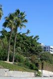 Palmen an einem hellen sonnigen Tag stockbilder
