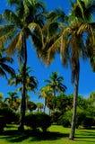 Palmen in einem Park stockbild