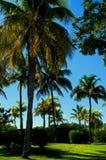 Palmen in einem Park lizenzfreies stockbild