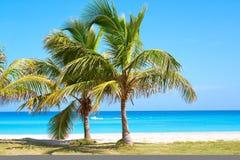 Palmen in einem sandigen Strand Stockfotografie