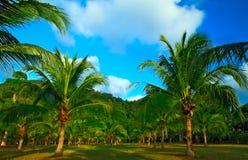 Palmen en bergen Stock Foto's