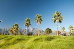 Palmen en Bergen Stock Afbeeldingen