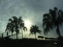 Palmen en bewolkt Stock Foto's