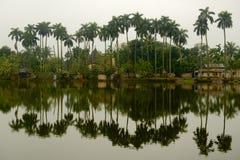 Palmen en bezinningen in Puthia, Bangladesh Stock Foto's