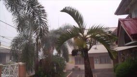 Palmen en bladerenslingering tijdens zware stortbui van regen stock footage