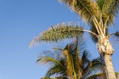 Palmen en blauwe hemel Stock Afbeeldingen
