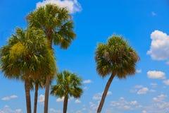 Palmen en Blauwe Hemel Royalty-vrije Stock Afbeelding