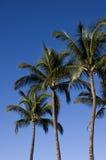 Palmen en Blauwe Hemel Royalty-vrije Stock Foto's
