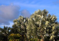 Palmen en blauwe hemel Stock Foto's