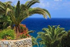 Palmen en blauwe overzees Royalty-vrije Stock Foto