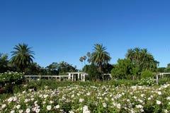 Palmen en bloemen in het park Royalty-vrije Stock Afbeeldingen