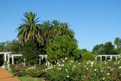 Palmen en bloemen in het park Stock Foto