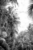 Palmen en bomen met groene bladeren in regenwoud Stock Foto's