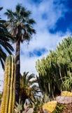 Palmen en cactus met wolken royalty-vrije stock fotografie