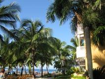 Palmen en Caraïbische overzees. Stock Fotografie