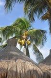 Palmen en daken van een gras. Royalty-vrije Stock Foto's