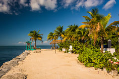 Palmen en de Golf van Mexico in Marathon, Florida Stock Fotografie