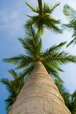 Palmen en de Hemel Royalty-vrije Stock Afbeeldingen