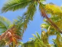 Palmen en een blauwe hemel en een witte wolkenachtergrond Royalty-vrije Stock Foto's