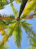 Palmen en een blauwe hemel en een witte wolkenachtergrond Stock Foto's