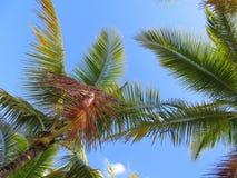 Palmen en een blauwe hemel en een witte wolkenachtergrond Royalty-vrije Stock Fotografie