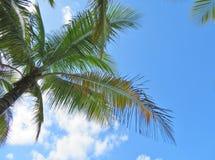 Palmen en een blauwe hemel en een witte wolkenachtergrond Stock Fotografie