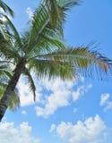 Palmen en een blauwe hemel en een witte wolkenachtergrond Stock Foto